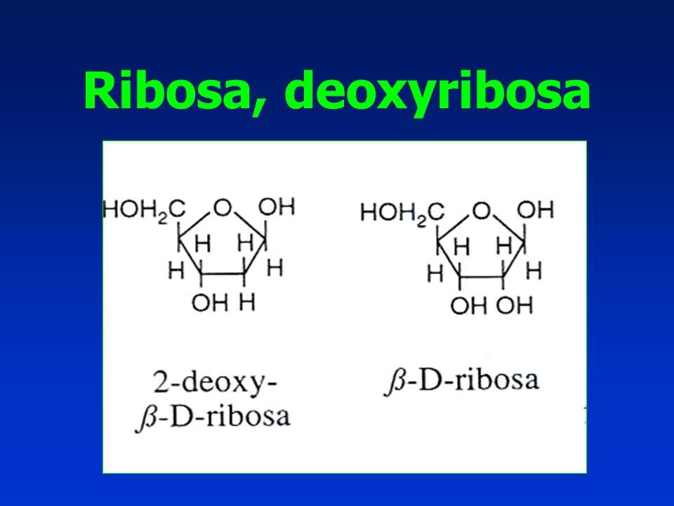 Ribosa, deoxyribosa