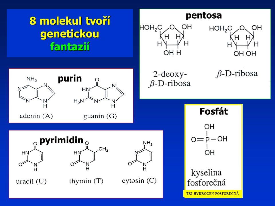 purin pyrimidin pentosa Fosfát 8 molekul tvoří genetickou fantazií TRI-HYDROGEN-FOSFOREČNÁ