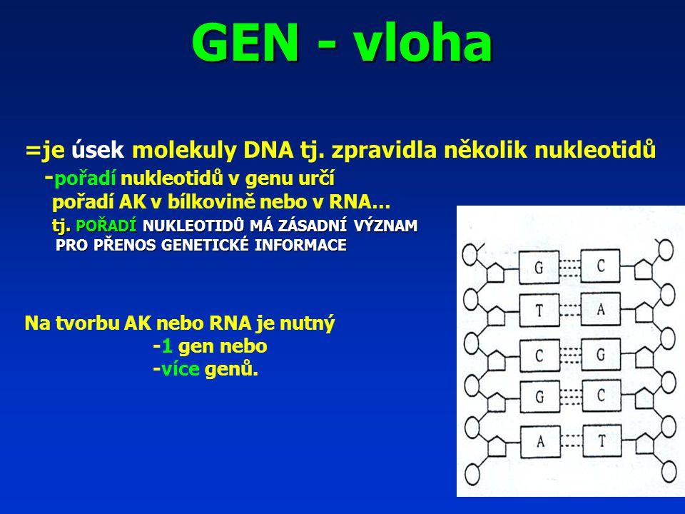 GEN - vloha =je úsek molekuly DNA tj.