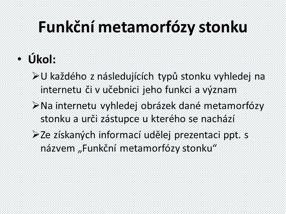 Funkční metamorfózy stonku Úkol:  U každého z následujících typů stonku vyhledej na internetu či v učebnici jeho funkci a význam  Na internetu vyhle