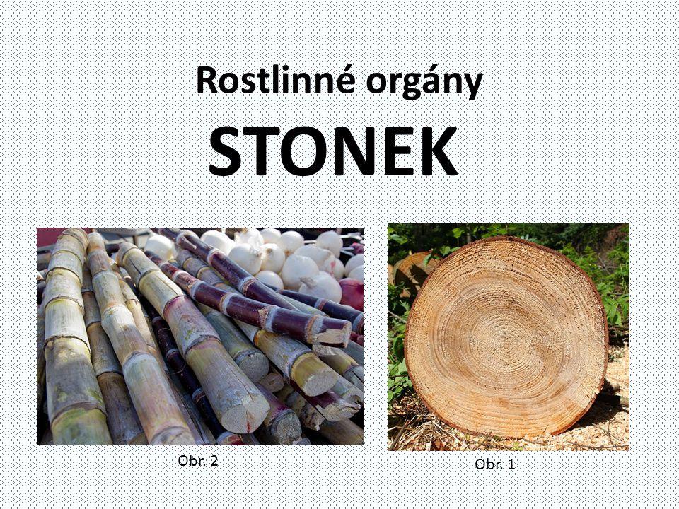 Rostlinné orgány STONEK Obr. 1 Obr. 2