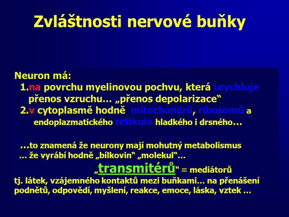"""Zvláštnosti nervové buňky Neuron má: 1.na povrchu myelinovou pochvu, která urychluje 1.na povrchu myelinovou pochvu, která urychluje přenos vzruchu… """"přenos depolarizace přenos vzruchu… """"přenos depolarizace 2.v cytoplasmě hodně mitochondrií, ribosomů a 2.v cytoplasmě hodně mitochondrií, ribosomů a endoplazmatického retikula hladkého i drsného … endoplazmatického retikula hladkého i drsného … … to znamená že neurony mají mohutný metabolismus … to znamená že neurony mají mohutný metabolismus … že vyrábí hodně """"bílkovin """"molekul … … že vyrábí hodně """"bílkovin """"molekul … """" transmitérů = mediátorů """" transmitérů = mediátorů tj."""