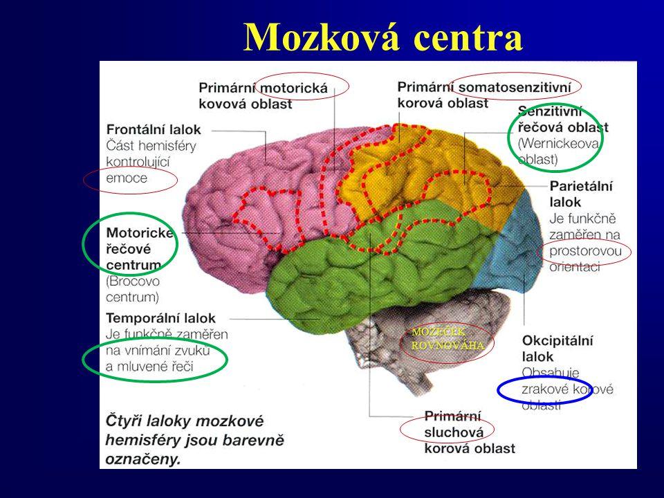 Mozková centra MOZEČEKROVNOVÁHA