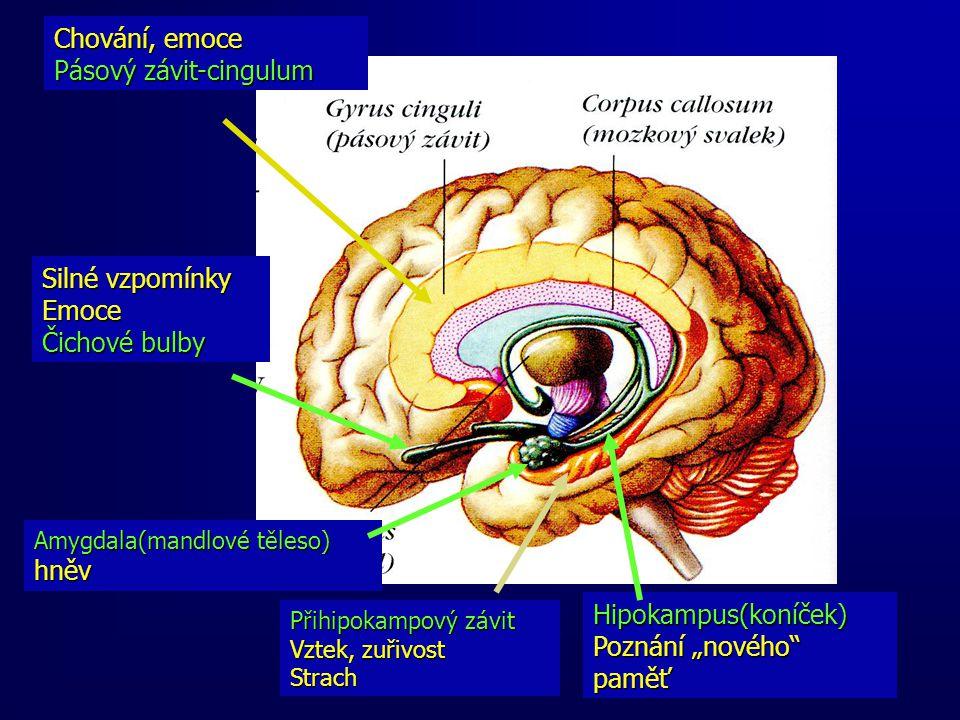 """Chování, emoce Pásový závit-cingulum Přihipokampový závit Vztek, zuřivost Strach Amygdala(mandlové těleso) hněv Silné vzpomínky Emoce Čichové bulby Hipokampus(koníček) Poznání """"nového paměť"""