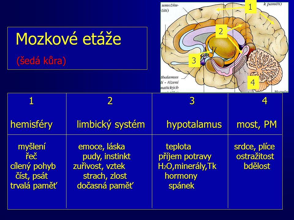 Mozkové etáže Mozkové etáže (šedá kůra) (šedá kůra) 1 2 3 4 1 2 3 4 hemisféry limbický systém hypotalamus most, PM myšlení emoce, láska teplota srdce, plíce myšlení emoce, láska teplota srdce, plíce řeč pudy, instinkt příjem potravy ostražitost řeč pudy, instinkt příjem potravy ostražitost cílený pohyb zuřivost, vztek H 2 O,minerály,Tk bdělost číst, psát strach, zlost hormony číst, psát strach, zlost hormony trvalá paměť dočasná paměť spánek 1 2 3 4