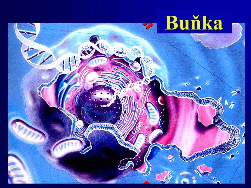 Buňka Buňka