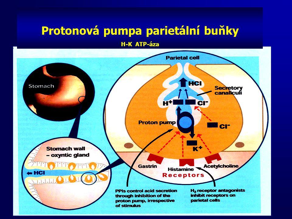 Protonová pumpa parietální buňky H-K ATP-áza