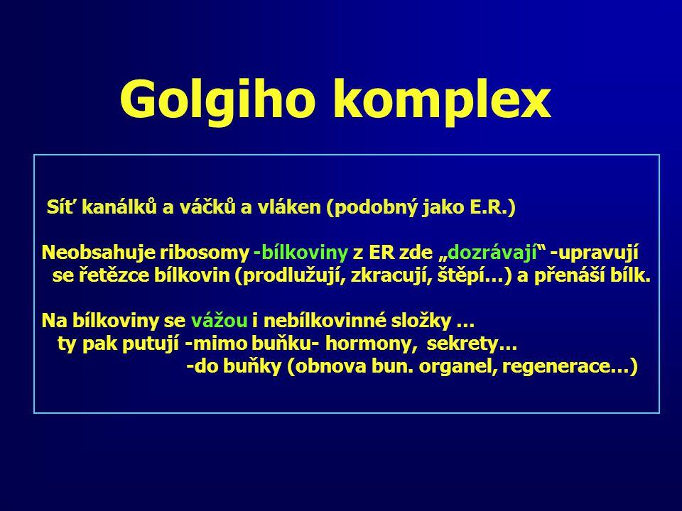 """Golgiho komplex Síť kanálků a váčků a vláken (podobný jako E.R.) Neobsahuje ribosomy -bílkoviny z ER zde """"dozrávají"""" -upravují se řetězce bílkovin (pr"""