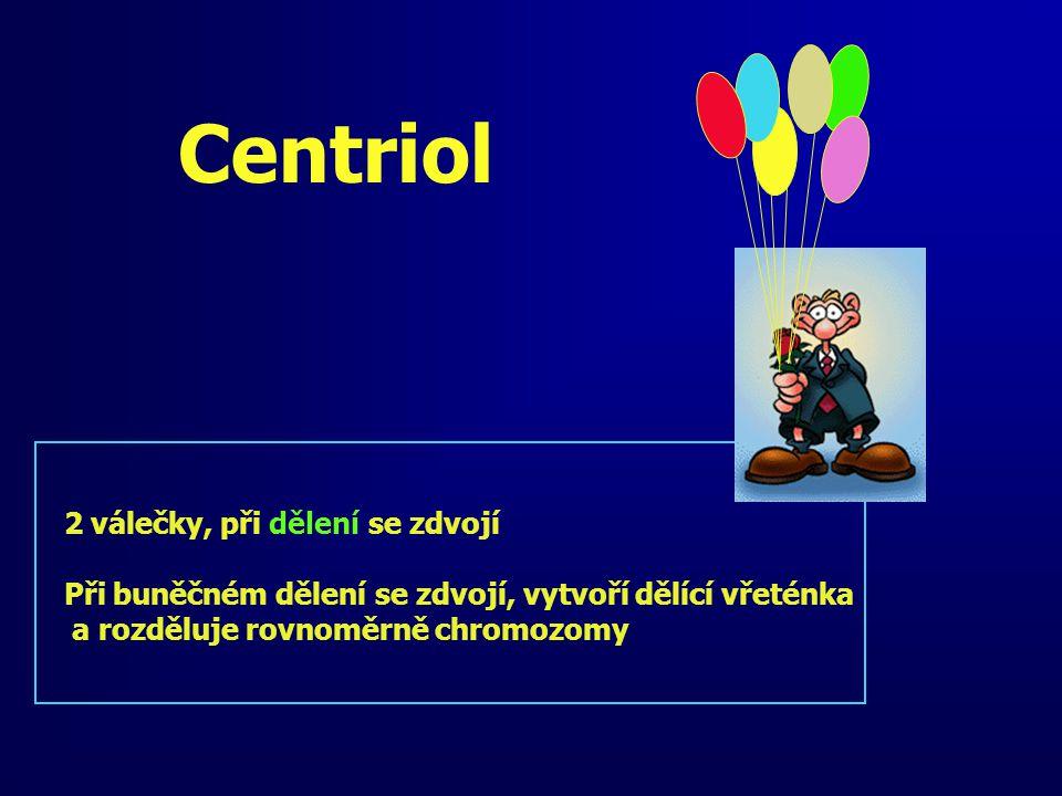 Centriol 2 válečky, při dělení se zdvojí Při buněčném dělení se zdvojí, vytvoří dělící vřeténka a rozděluje rovnoměrně chromozomy