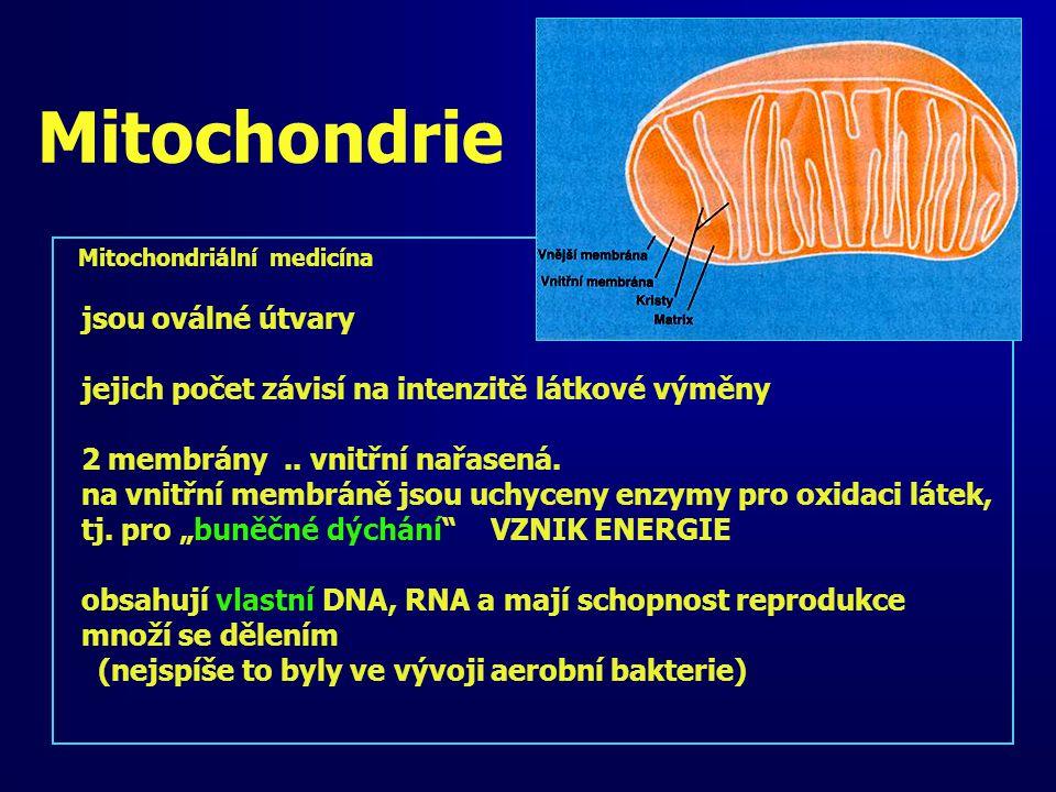 Mitochondriální medicína jsou oválné útvary jejich počet závisí na intenzitě látkové výměny 2 membrány.. vnitřní nařasená. na vnitřní membráně jsou uc