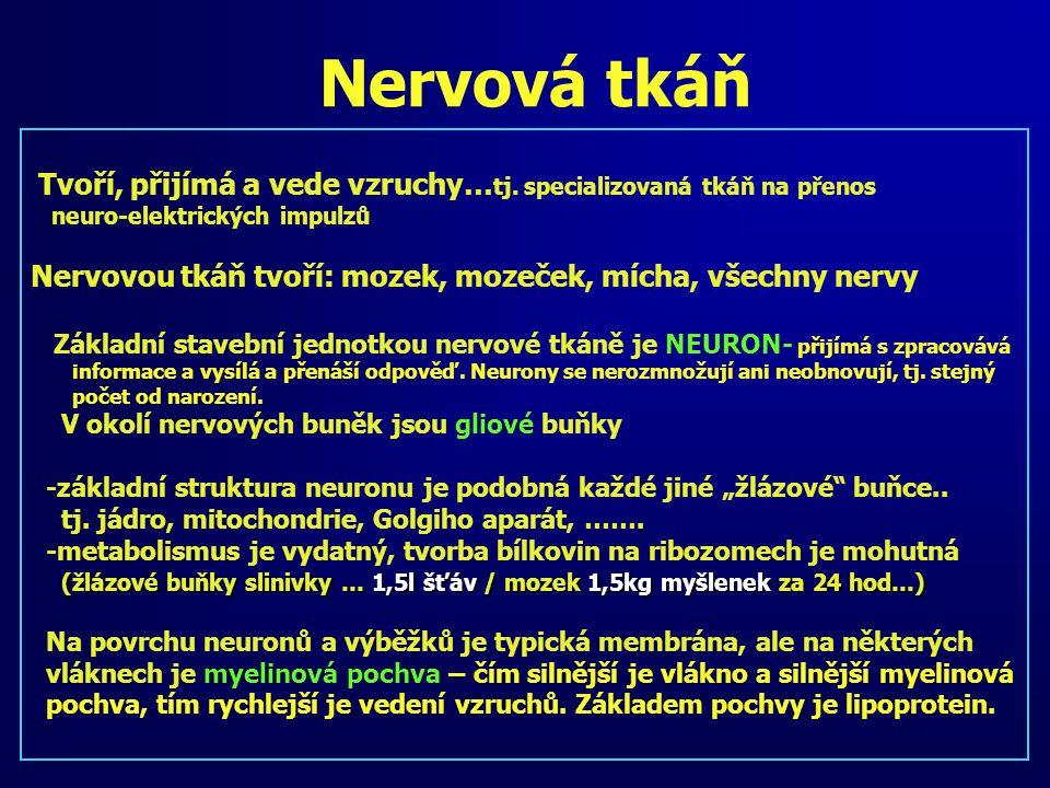 Nervová tkáň Tvoří, přijímá a vede vzruchy… tj. specializovaná tkáň na přenos neuro-elektrických impulzů Nervovou tkáň tvoří: mozek, mozeček, mícha, v