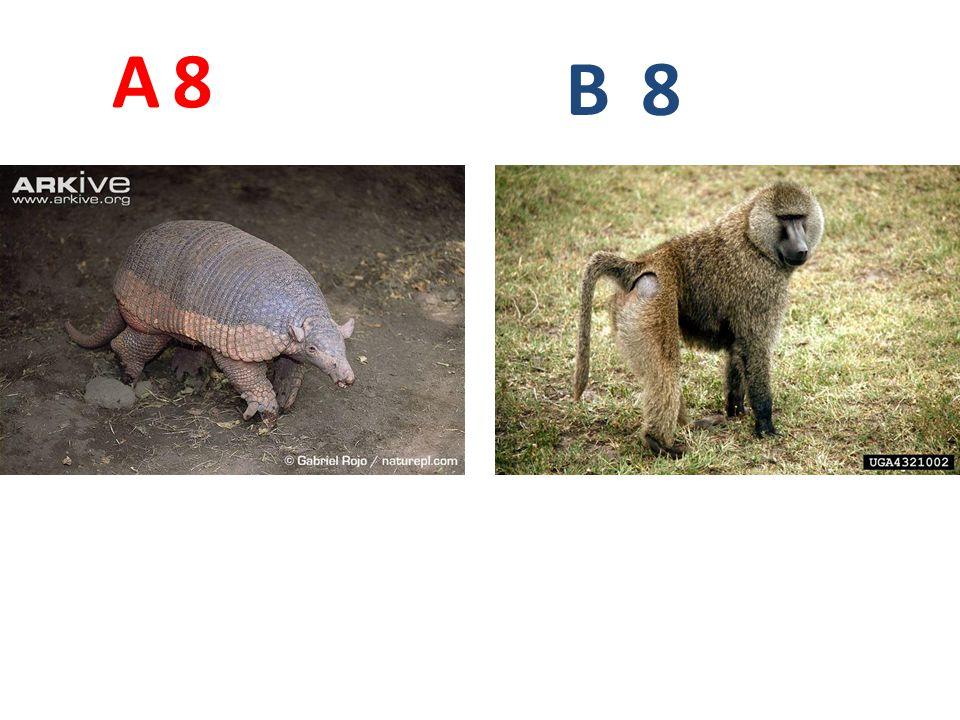 8 A B 8