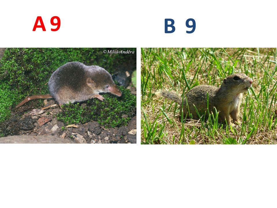 9 A B 9