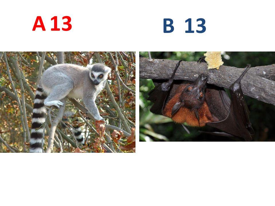 13 A B