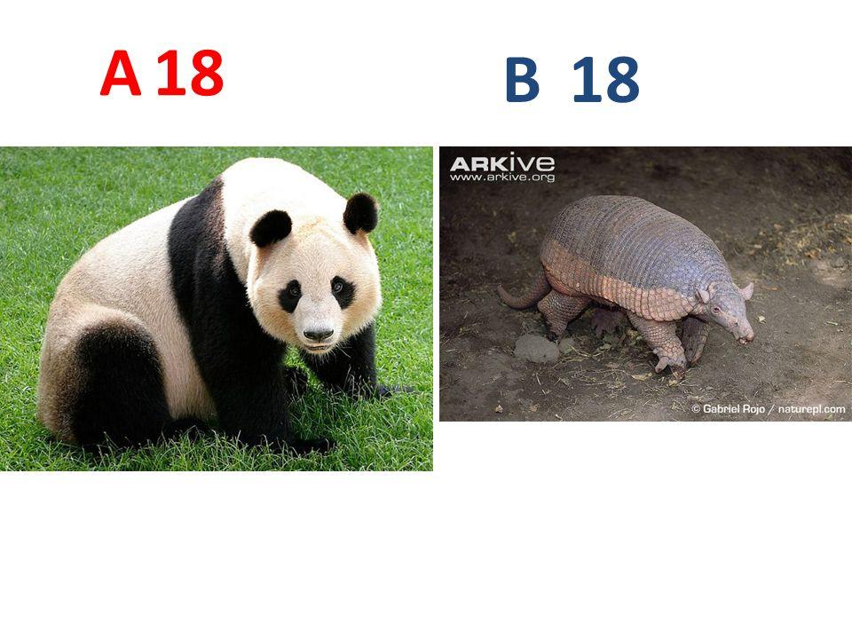 18 A B