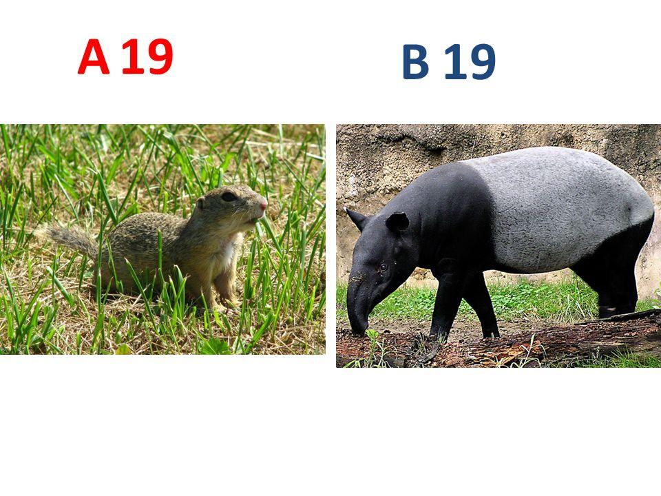 19 A B
