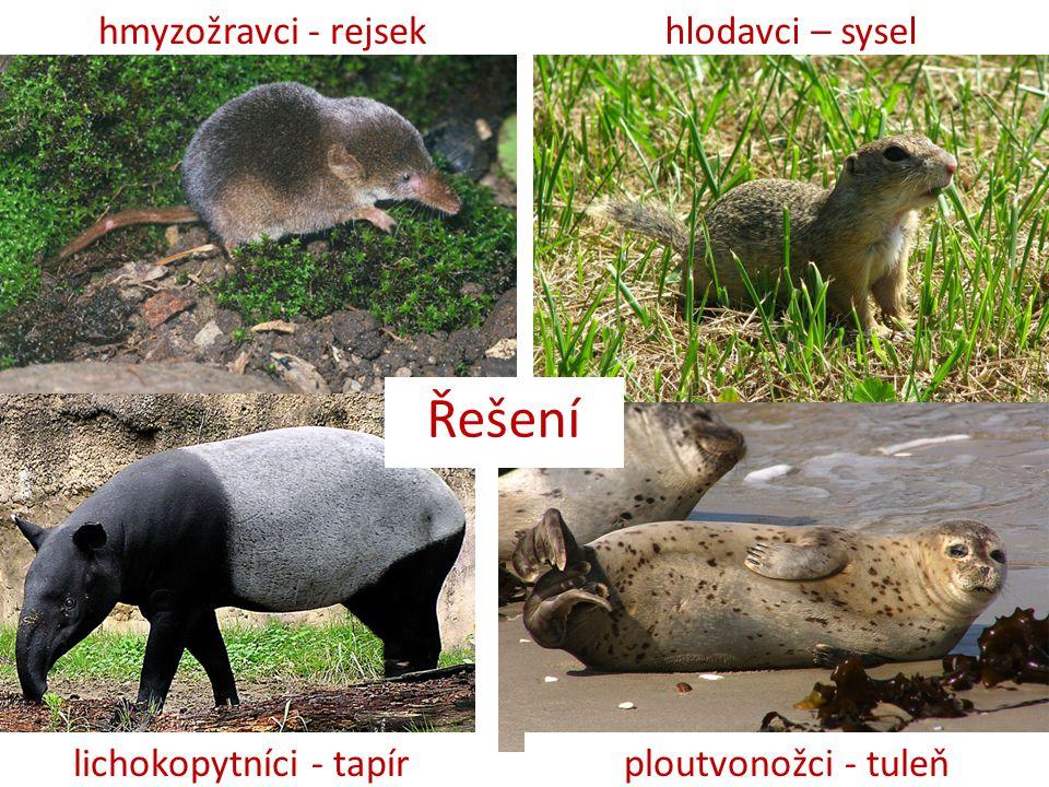 Řešení hmyzožravci - rejsekhlodavci – sysel lichokopytníci - tapírploutvonožci - tuleň