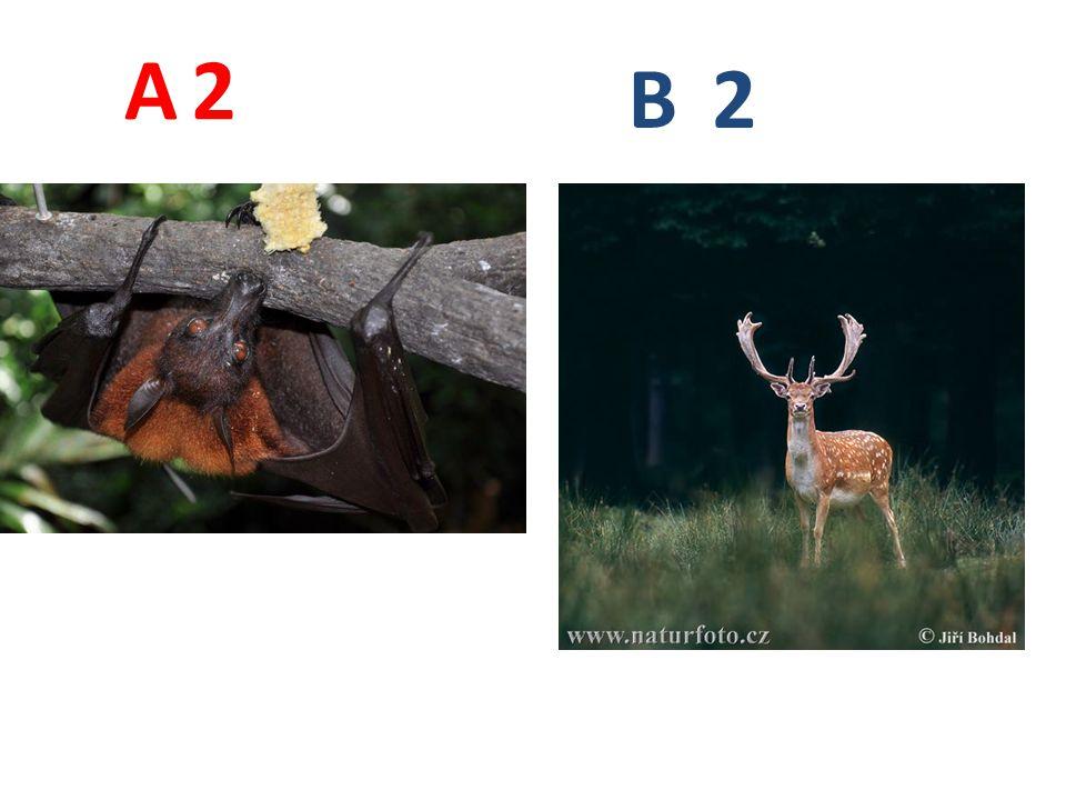 Řešení sudokopytníci - lamaprimáti - lemur sudokopytníci - muflonprimáti - orangutan