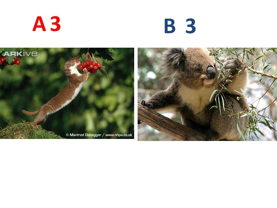 3 A B 3