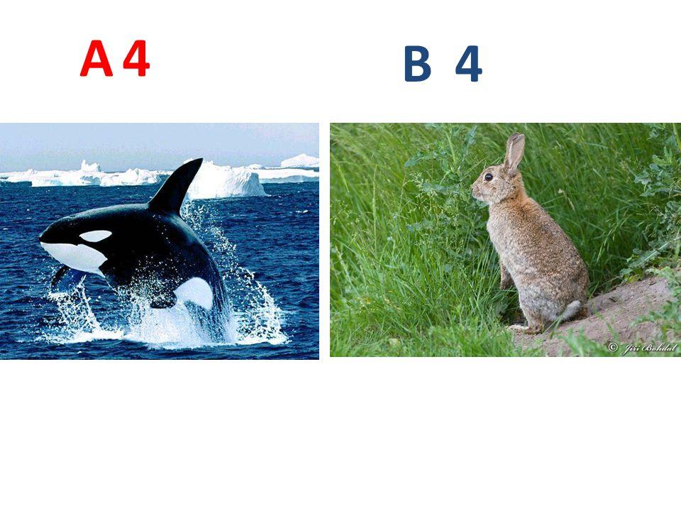 5 A B 5