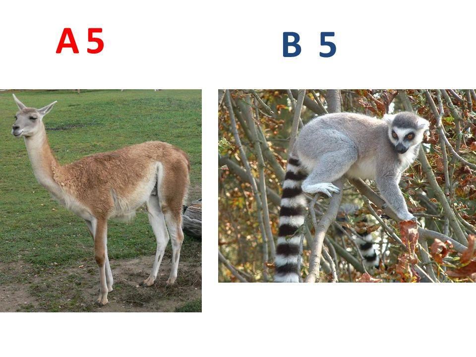 6 A B 6