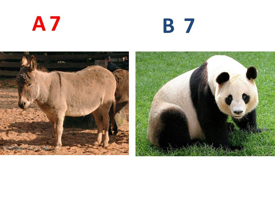 7 A B 7