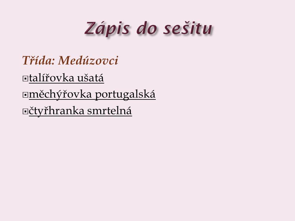 Třída: Medúzovci  talířovka ušatá  měchýřovka portugalská  čtyřhranka smrtelná