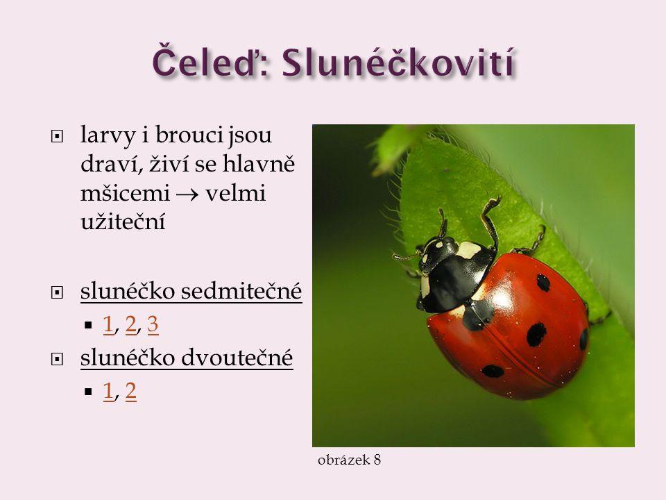  larvy i brouci jsou draví, živí se hlavně mšicemi  velmi užiteční  slunéčko sedmitečné  1, 2, 3 123  slunéčko dvoutečné  1, 2 12 obrázek 8