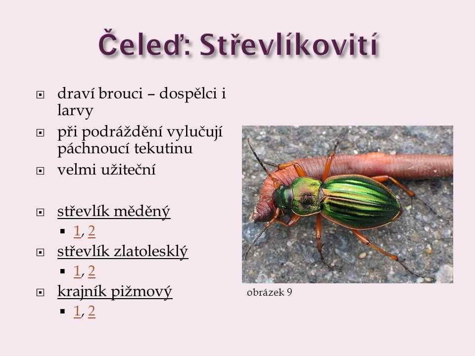  draví brouci – dospělci i larvy  při podráždění vylučují páchnoucí tekutinu  velmi užiteční  střevlík měděný  1, 2 12  střevlík zlatolesklý  1