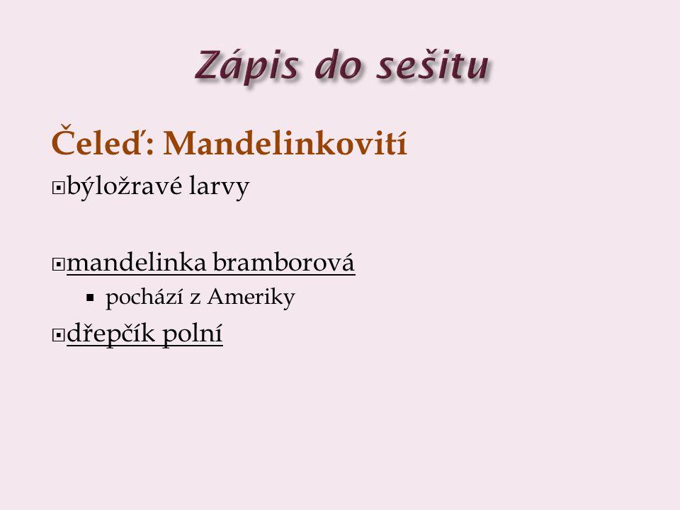 Čeleď: Mandelinkovití  býložravé larvy  mandelinka bramborová  pochází z Ameriky  dřepčík polní