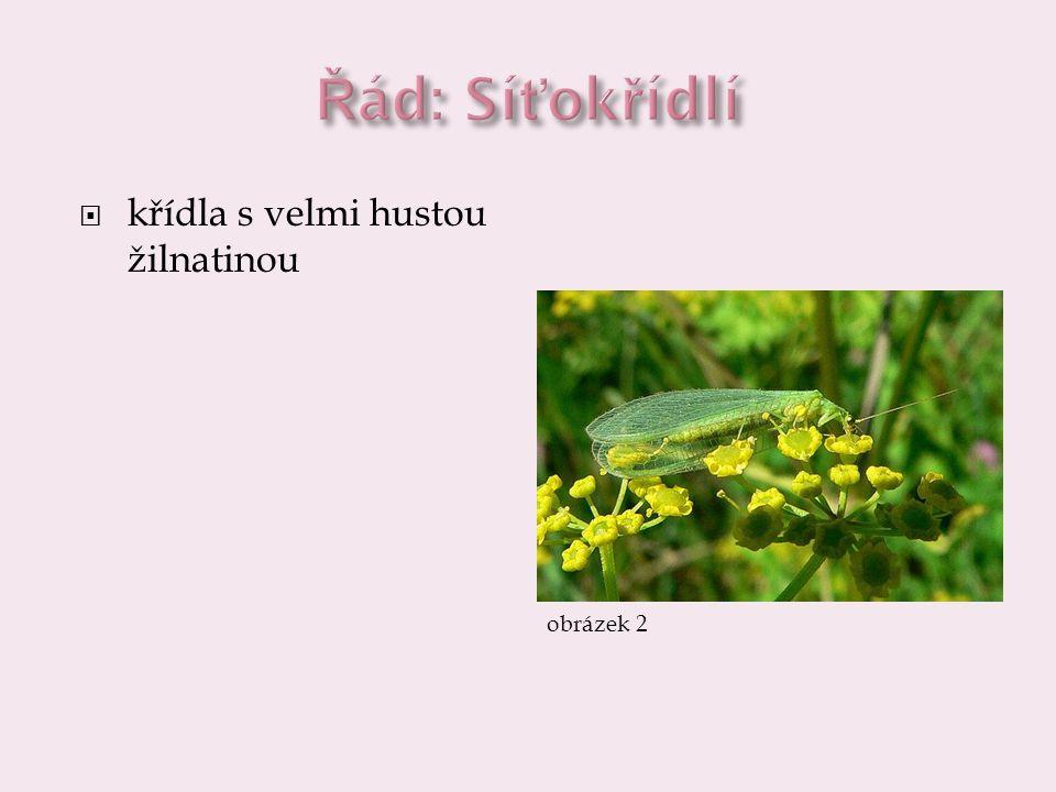  zlatoočka obecná  má zelené zbarvení, hustě žilkovaná křídla a zlatavé oči  larvy jsou dravé, živí se nejčastěji mšicemi  1, 2 12  mravkolev  larvy si v písčité půdě vyhrabávají nálevkovitou jamku, na jejím dně se zahrabou a loví do ní hmyz  1, 2, 3 123  video video