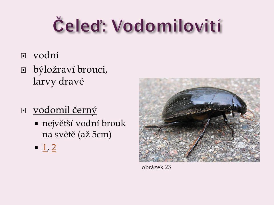  vodní  býložraví brouci, larvy dravé  vodomil černý  největší vodní brouk na světě (až 5cm)  1, 2 12 obrázek 23