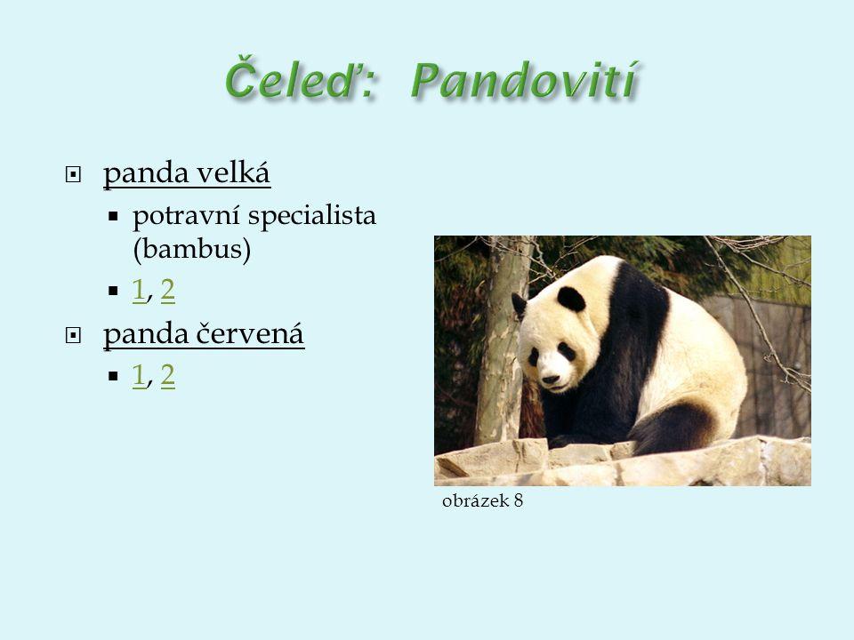  panda velká  potravní specialista (bambus)  1, 2 12  panda červená  1, 2 12 obrázek 8