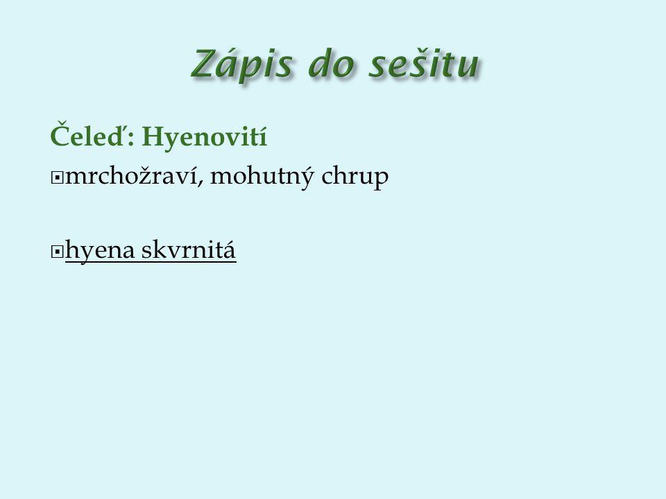 Čeleď: Hyenovití  mrchožraví, mohutný chrup  hyena skvrnitá