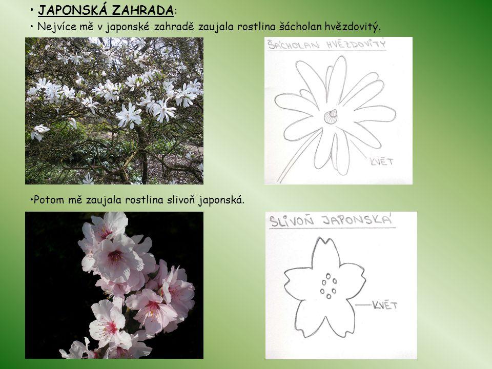 JAPONSKÁ ZAHRADA : Nejvíce mě v japonské zahradě zaujala rostlina šácholan hvězdovitý. Potom mě zaujala rostlina slivoň japonská.