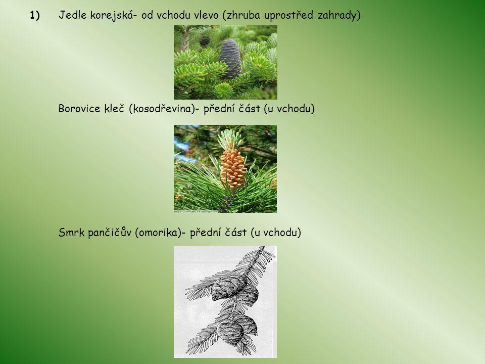 1) Jedle korejská- od vchodu vlevo (zhruba uprostřed zahrady) Borovice kleč (kosodřevina)- přední část (u vchodu) Smrk pančičův (omorika)- přední část (u vchodu)