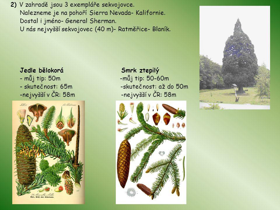 2) V zahradě jsou 3 exempláře sekvojovce. Nalezneme je na pohoří Sierra Nevada- Kalifornie. Dostal i jméno- General Sherman. U nás nejvyšší sekvojovec