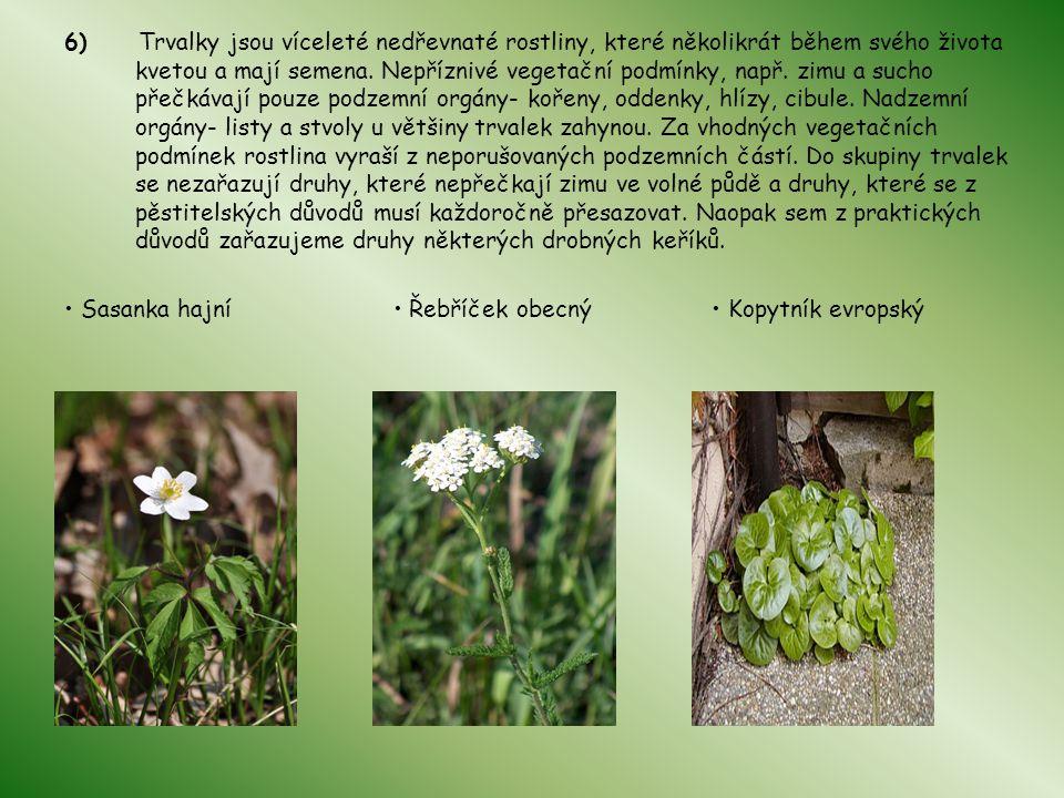 6) Trvalky jsou víceleté nedřevnaté rostliny, které několikrát během svého života kvetou a mají semena. Nepříznivé vegetační podmínky, např. zimu a su