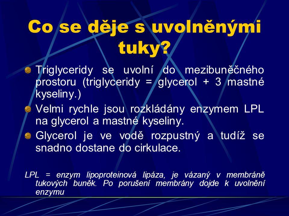 Co se děje s uvolněnými tuky? Triglyceridy se uvolní do mezibuněčného prostoru (triglyceridy = glycerol + 3 mastné kyseliny.) Velmi rychle jsou rozklá