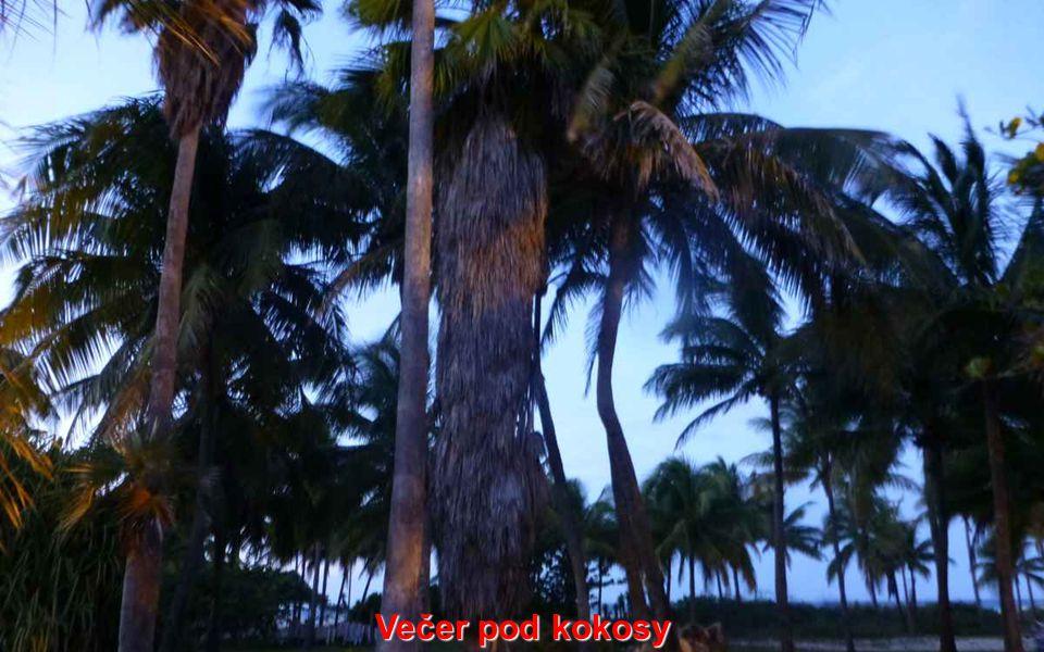 Večer pod kokosy
