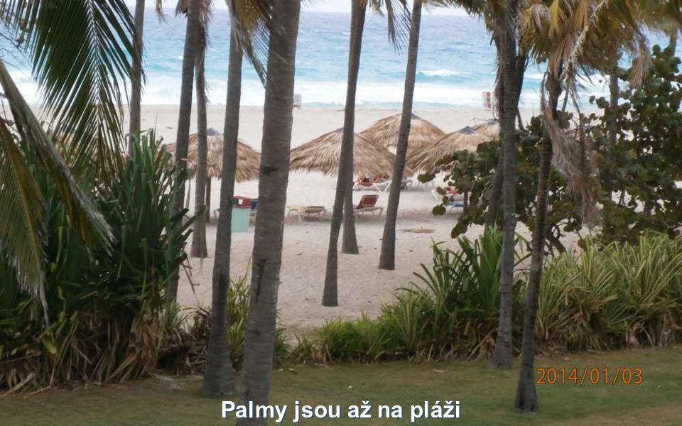 Palmy jsou až na pláži