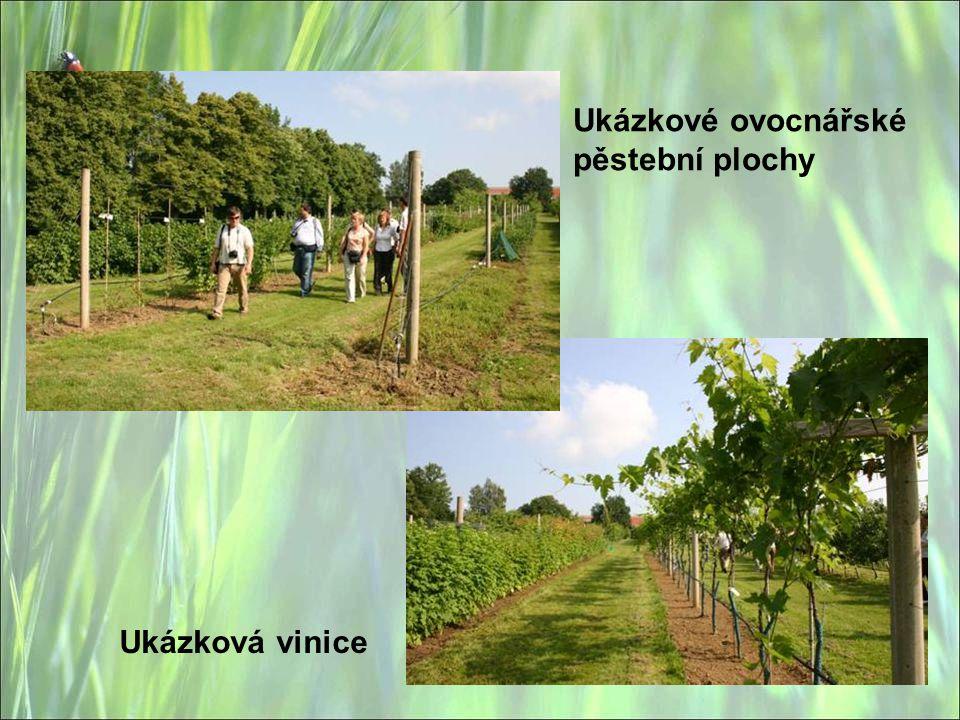 Ukázkové ovocnářské pěstební plochy Ukázková vinice