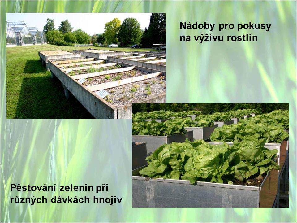 Nádoby pro pokusy na výživu rostlin Pěstování zelenin při různých dávkách hnojiv