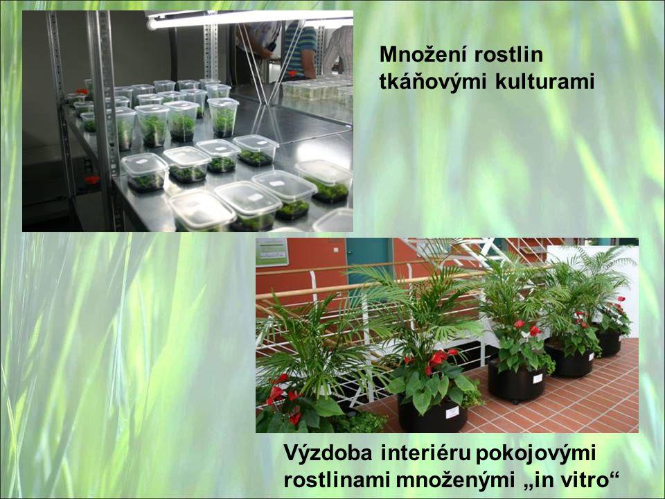 """Množení rostlin tkáňovými kulturami Výzdoba interiéru pokojovými rostlinami množenými """"in vitro"""