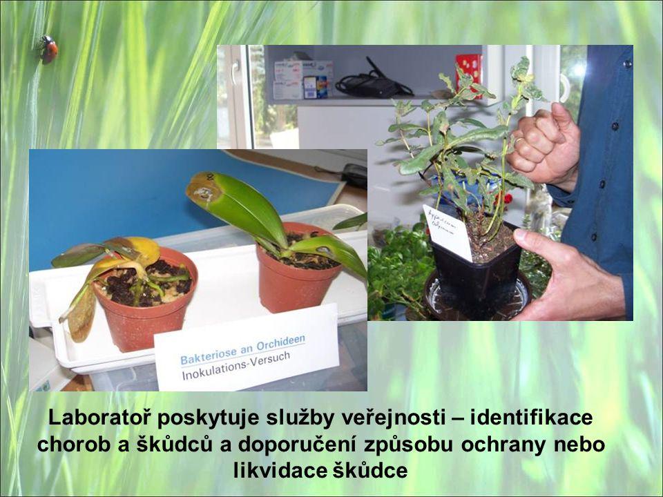 Laboratoř poskytuje služby veřejnosti – identifikace chorob a škůdců a doporučení způsobu ochrany nebo likvidace škůdce