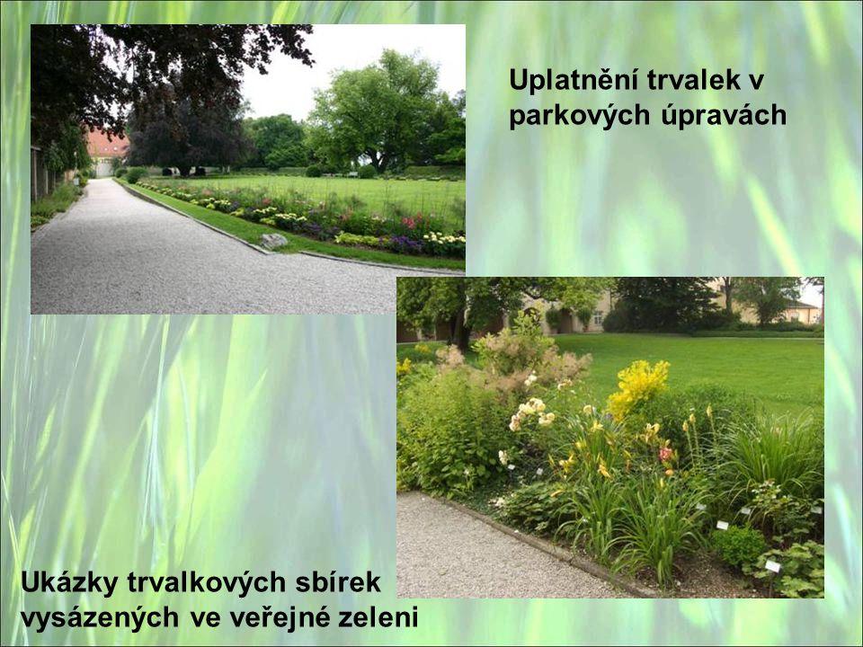 Ukázky trvalkových sbírek vysázených ve veřejné zeleni Uplatnění trvalek v parkových úpravách