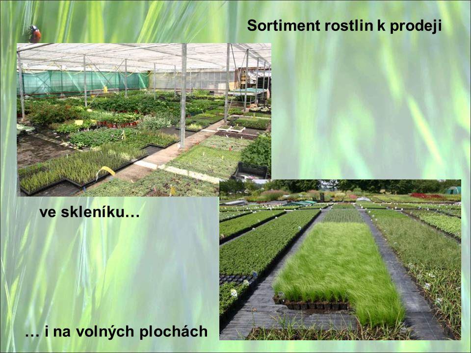 Sortiment rostlin k prodeji ve skleníku… … i na volných plochách