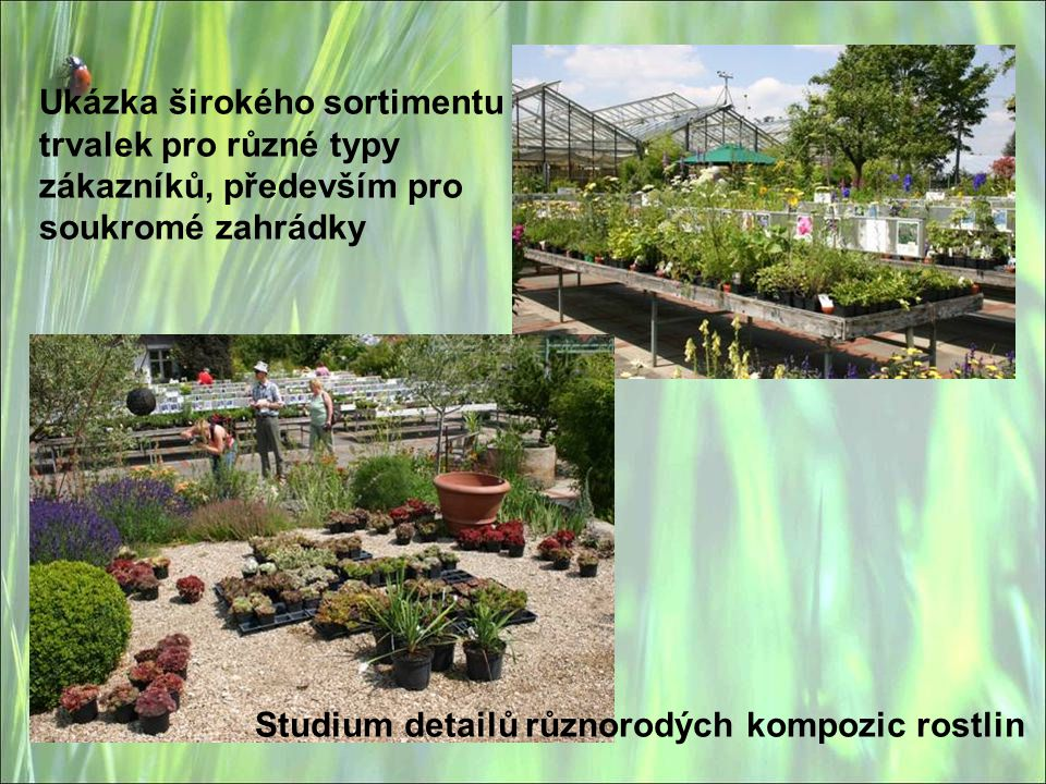Ukázka širokého sortimentu trvalek pro různé typy zákazníků, především pro soukromé zahrádky Studium detailů různorodých kompozic rostlin