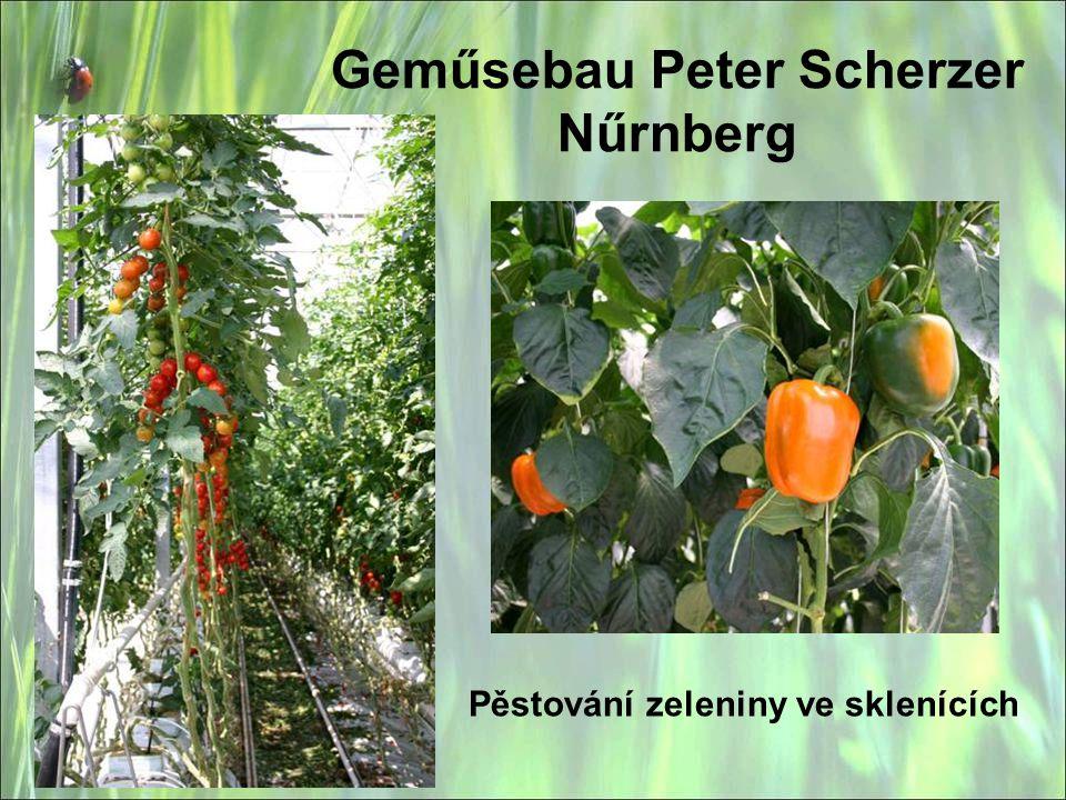 Pěstování zeleniny ve sklenících Geműsebau Peter Scherzer Nűrnberg
