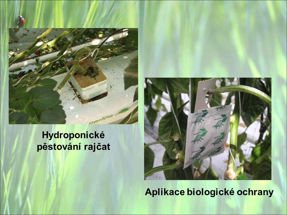 Aplikace biologické ochrany Hydroponické pěstování rajčat